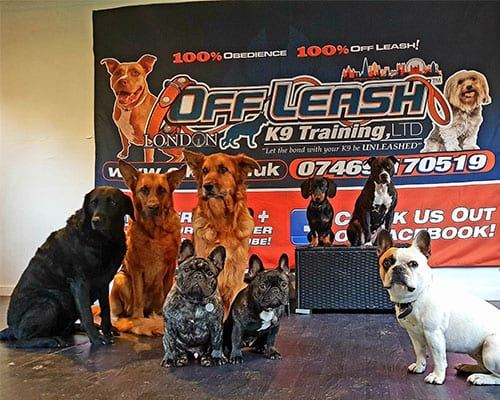 Best Dog Training Results